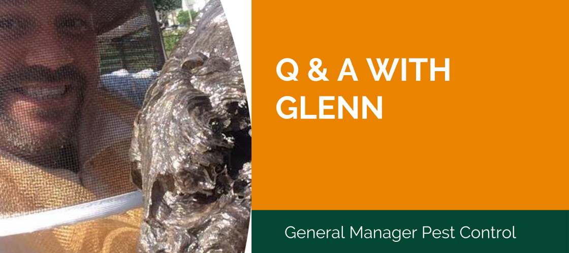 Q & A with Glenn Newman, Pest Control Manager at BW Home Sevices.