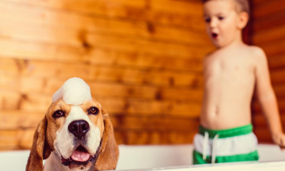 Boy and dog in the tub with soap suds