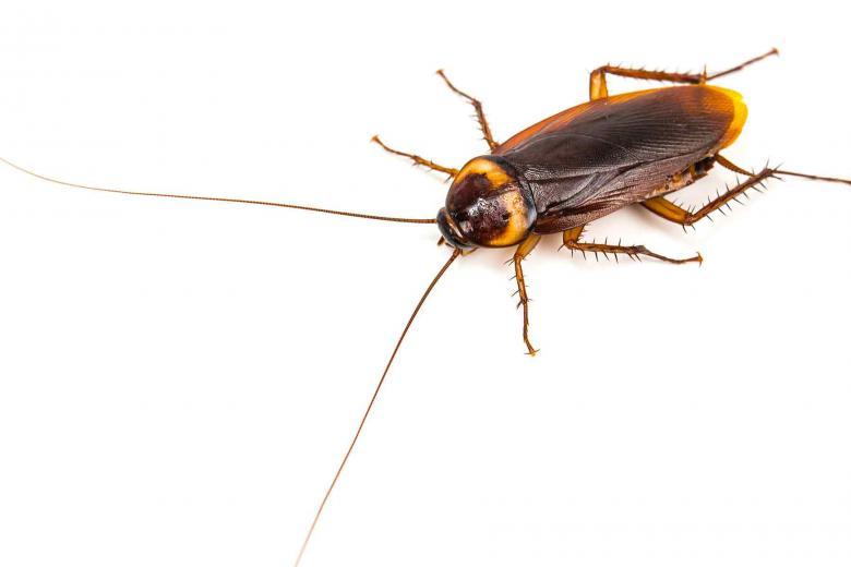 Pest Control in Connecticut