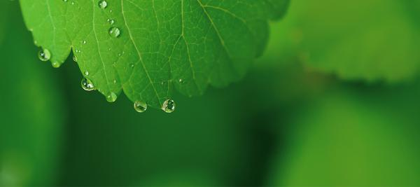 Green leaf with a raindrop