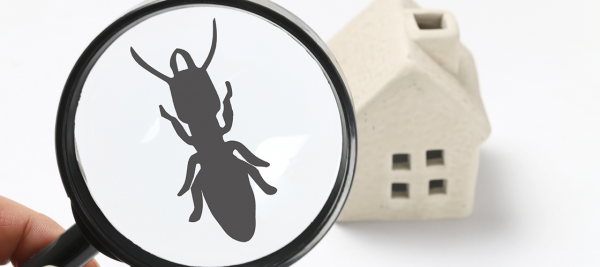 BW Home Services announces pest control division