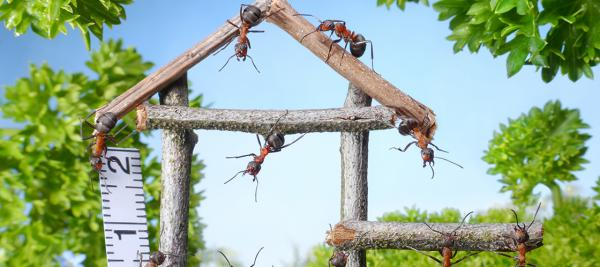 Ants building a house to show teamwork