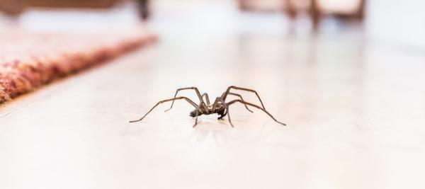 A spider sitting on a coutertop