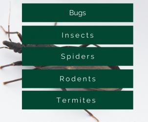 on demand pest control